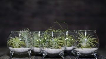 Aerium -  un proiect românesc cu plante aeriene și suporturi ingenioase